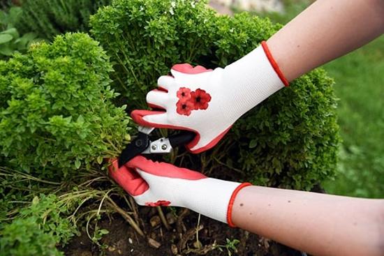 Fotografija izdelka Vrtnarske ROKAVICE GardenCare (št. 8/M) rdeče