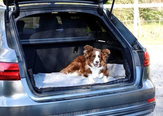 Fotografija izdelka Potovalna odeja za pse