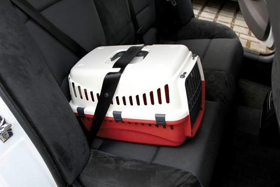 Fotografija izdelka Transportni boks Expedion red - 45 cm