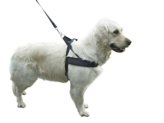 Fotografija izdelka Oprsnica za psa Miami Plus - M