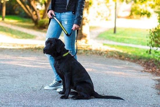 Fotografija izdelka Odsevna ovratnica za psa Light & Reflex - M