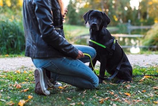 Fotografija izdelka Odsevna oprsnica za psa Light & Reflex - S