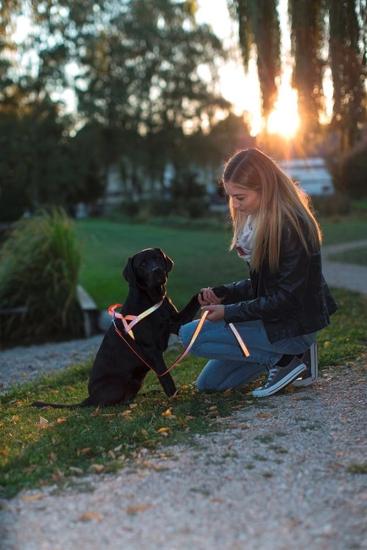 Fotografija izdelka Odsevna oprsnica za psa Reflective - L