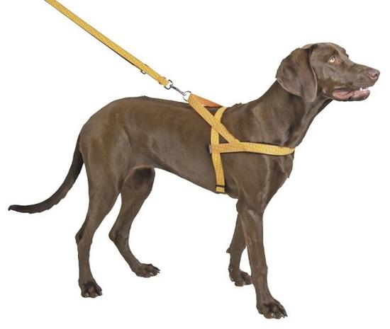 Fotografija izdelka Odsevna oprsnica za psa Reflective - XL