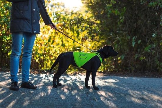 Fotografija izdelka Varnostni jopič za psa - M