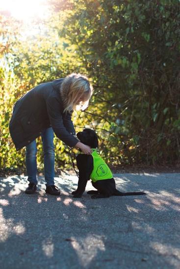 Fotografija izdelka Varnostni jopič za psa - XL
