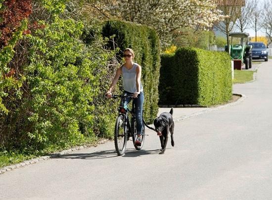Fotografija izdelka Povodec in pas za tek s psom Active- spiralni, komplet