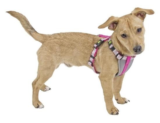 Fotografija izdelka Oprsnica za male pse S - roza