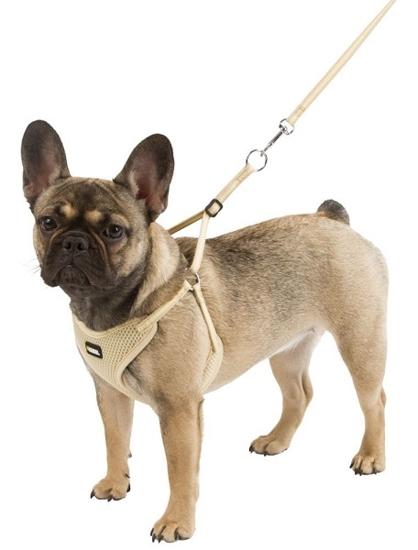 Fotografija izdelka Oprsnica in povodec za male pse - XS, komplet