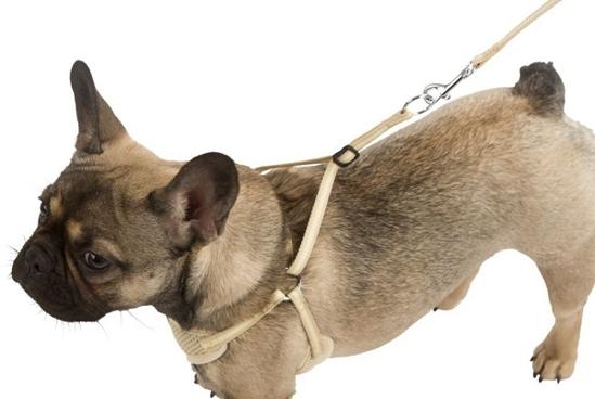 Fotografija izdelka Oprsnica in povodec za male pse - S, komplet