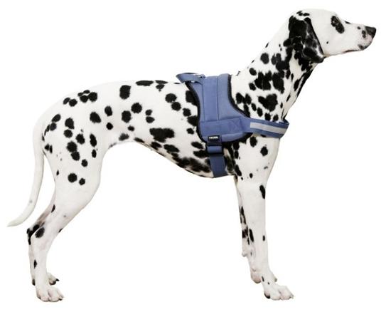 Fotografija izdelka Oprsnica za psa Maestro - M