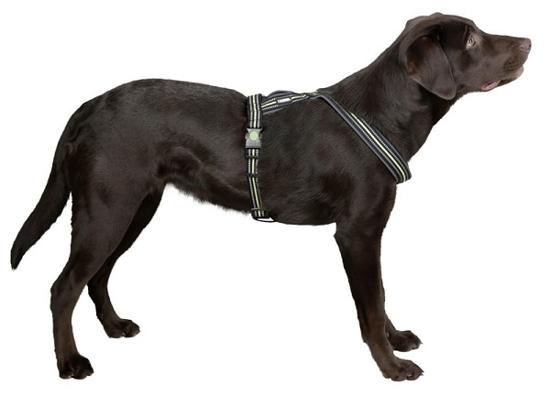 Fotografija izdelka Oprsnica za psa Xenos - S