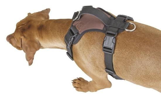 Fotografija izdelka Oprsnica za psa Pulsive - L