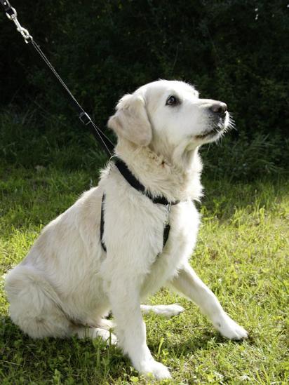 Fotografija izdelka Oprsnica za trening psa - L