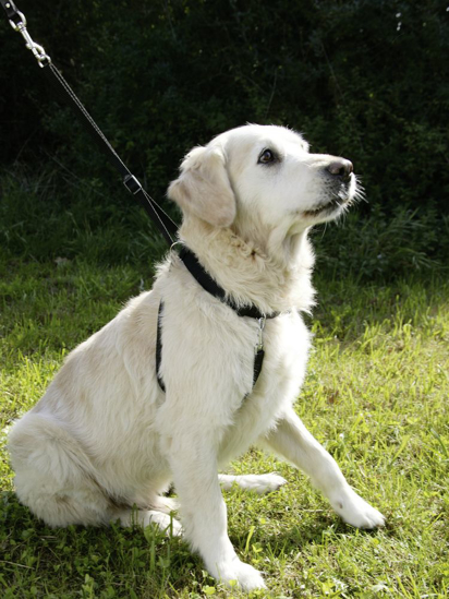 Fotografija izdelka Oprsnica za trening psa - XL