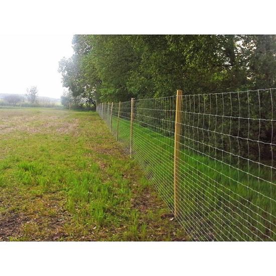 Fotografija izdelka Pocinkana zaščitna mreža 125 cm / 50 m