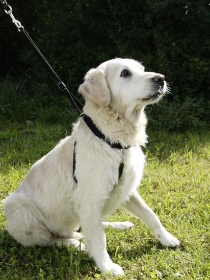 Fotografija izdelka Oprsnica za trening psa - S