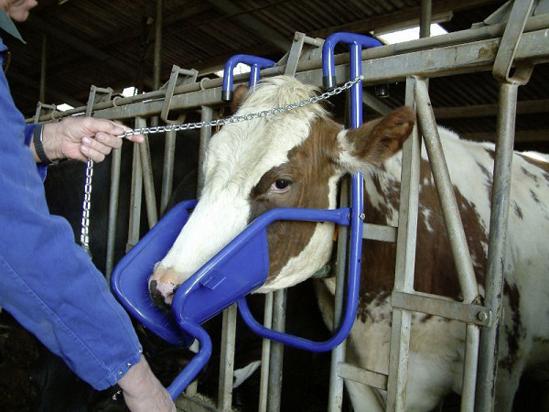 Fotografija izdelka Naslon za glavo za govedo