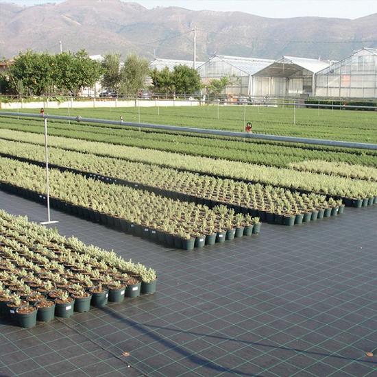 Fotografija izdelka Folija za zatiranje plevela širine 2,10 m | 1m