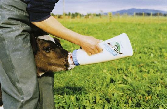 Fotografija izdelka Duda s pokrovom za stekleničko Speedy Feeder